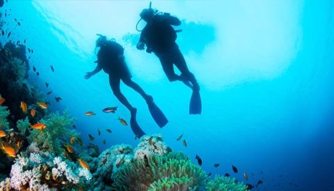 Submarinismo en fondos repletos de vida